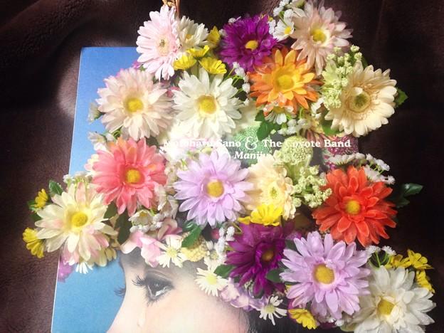 #スーパーブルーブラッドムーン の夜に生まれた摩尼珠花(マニジュフラワー)を昨年末の幕張メッセに続いて日本青年館にも持って行きます。フロアで咲いてくれたらいいナ(^人^) #佐野元春