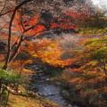 紅葉に桜のアクセント