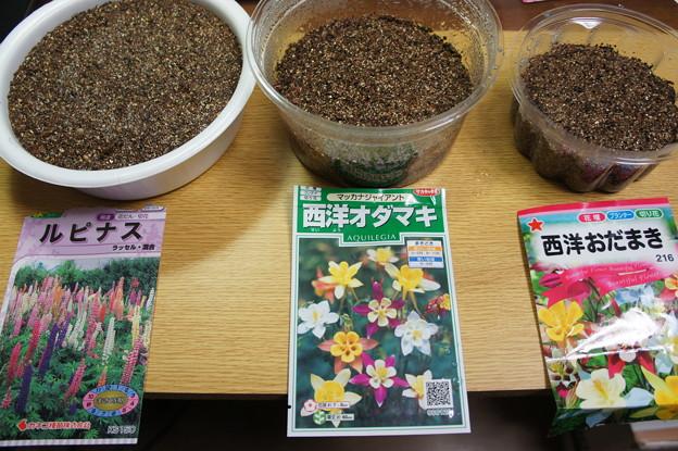 種蒔き ルピナス、西洋オダマキ