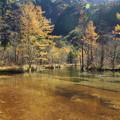 151016-139焼岳登山と上高地・田代池
