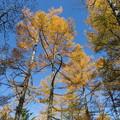 151016-147焼岳登山と上高地・黄葉の紅葉