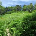写真: 180726-32再挑戦「霞沢岳登山」・お花畑