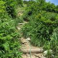 写真: 180726-47再挑戦「霞沢岳登山」・K1ピークへの登り
