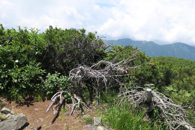写真: 180726-78再挑戦「霞沢岳登山」・霞沢岳からの360度(3/9)