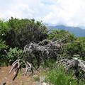 Photos: 180726-78再挑戦「霞沢岳登山」・霞沢岳からの360度(3/9)