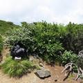 写真: 180726-79再挑戦「霞沢岳登山」・霞沢岳からの360度(4/9)