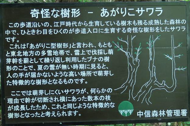 180727-35奇怪な樹形