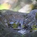 私の野鳥図鑑(蔵出し)・111212メジロの水浴び