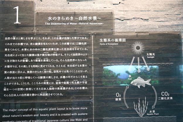 190201-77スカイツリーから日本橋まで・すみだ水族館・水のきらめき~自然水景~