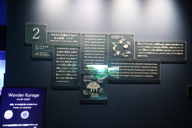 190201-78スカイツリーから日本橋まで・すみだ水族館・ゆりかごの連なり