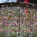 190331-94日比谷公園界隈散策・東京ミッドタウン日比谷前のお花
