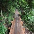 190725-19大江湿原と尾瀬沼・尾瀬沼時計回り一周・立派な木道もあります