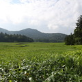 Photos: 190725-38大江湿原と尾瀬沼・尾瀬沼時計回り一周・沼尻から長蔵小屋への道の右側の景色