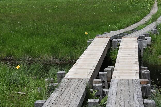 190725-58大江湿原と尾瀬沼・尾瀬沼反時計回り一周・木道