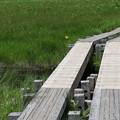 Photos: 190725-58大江湿原と尾瀬沼・尾瀬沼反時計回り一周・木道