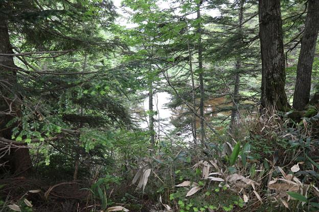 190725-64大江湿原と尾瀬沼・尾瀬沼反時計回り一周・小沼湿原の沼?