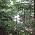 Photos: 190725-64大江湿原と尾瀬沼・尾瀬沼反時計回り一周・小沼湿原の沼?
