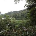Photos: 190725-67大江湿原と尾瀬沼・尾瀬沼反時計回り一周・尾瀬沼