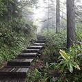 190726-10大江湿原と尾瀬沼・沼山峠・沼山峠への登り