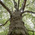 森の守護神