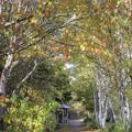 写真: 秋の小道