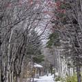 写真: 冬の小道