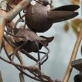 写真: 新種の鳥