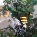 写真: 蝉を捕まえてた