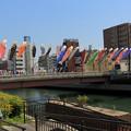 写真: 南海堺駅前 鯉のぼり