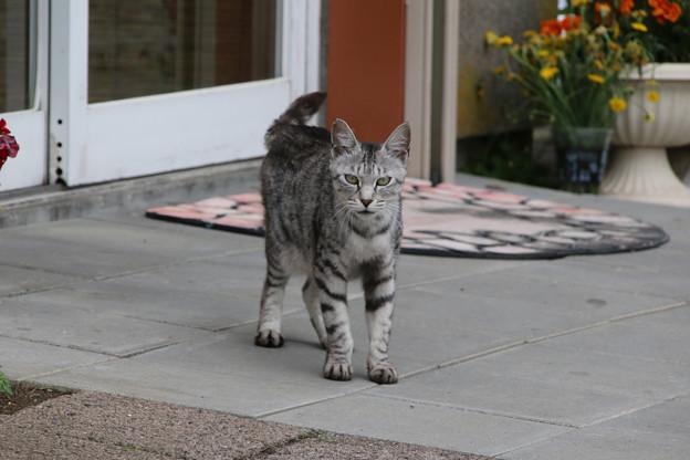 サロベツファームの母猫