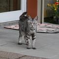 Photos: サロベツファームの母猫