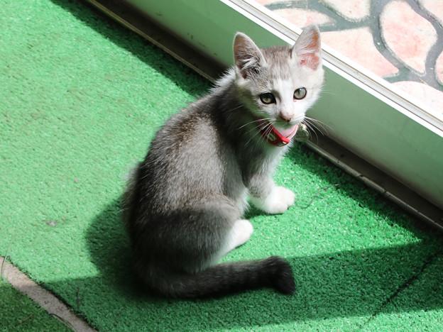 サロベツファームの仔猫