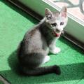 Photos: サロベツファームの仔猫