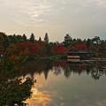 昭和記念公園紅葉