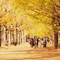 Photos: 昭和記念公園2