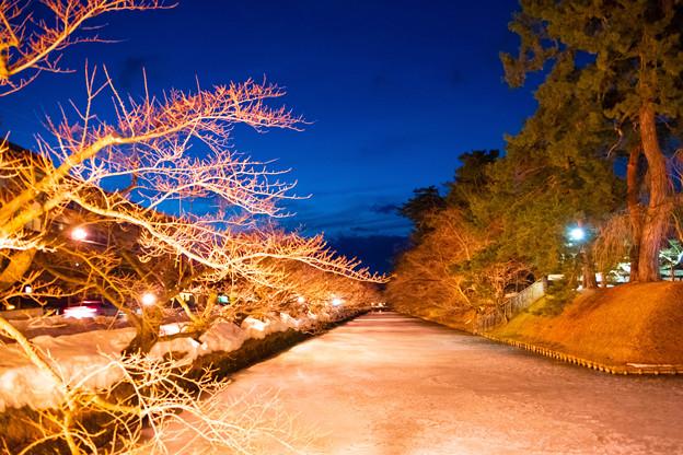 弘前城冬に咲くさくらライトアップ