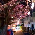 大岡川プロムナード夜桜