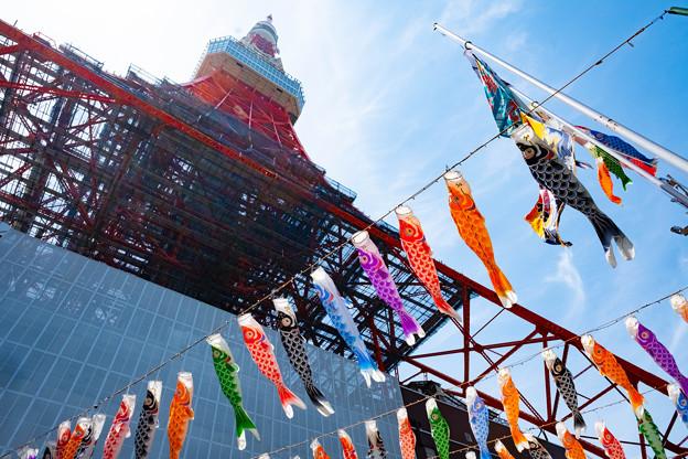 東京タワー鯉のぼり