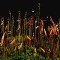 写真: 苔と露玉