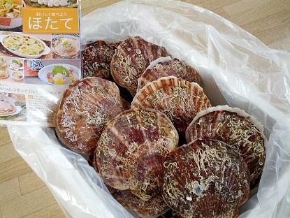 Photos: 寿都産ホタテ貝