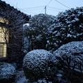 雪(2017年2月27日撮影、仙台市青葉区にて)