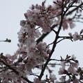 開花(2018.3.19)