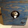 Photos: スツール カホン 猫小屋?
