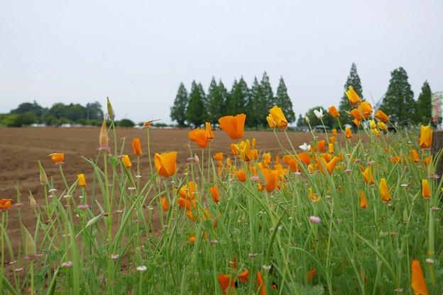 あけぼの山農業公園P1060976