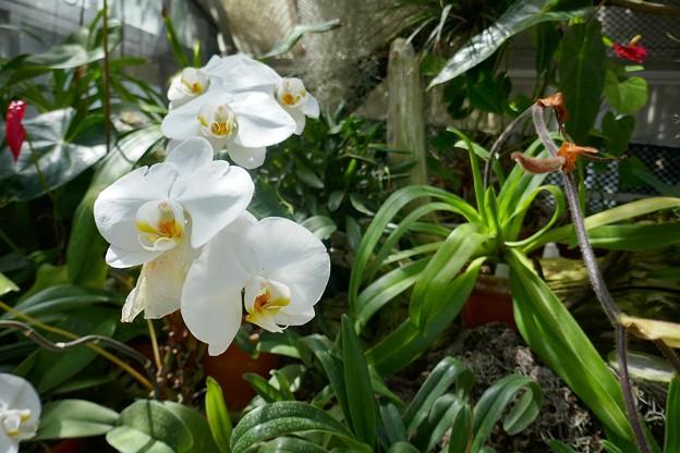 熱川バナナワニ園P1070693