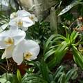 写真: 熱川バナナワニ園P1070693
