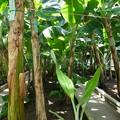 写真: 熱川バナナワニ園P1070695