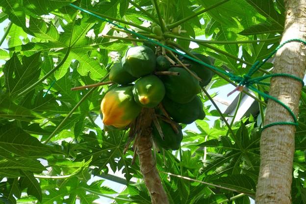 熱川バナナワニ園P1070698