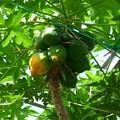 写真: 熱川バナナワニ園P1070698