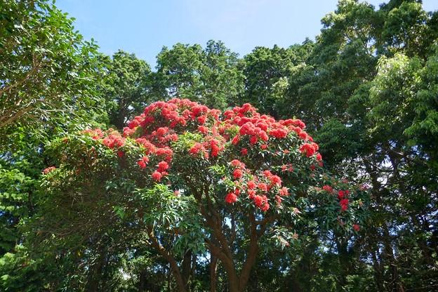 熱川バナナワニ園P1070699